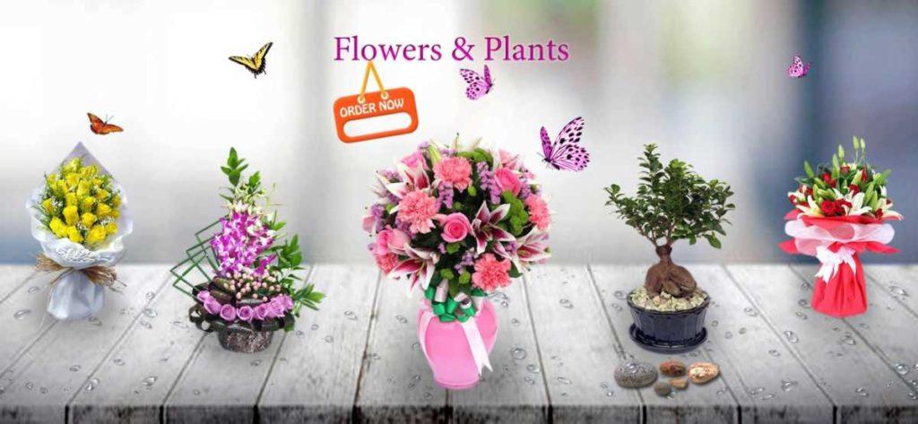741219d45ec9e1063c3ba8320ef5407d25b261a7_flowers-&-plants-banner02.jpg