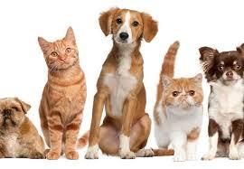 Pets care services