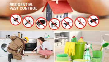 Residential-Pest-Control-&-Cleaning-Services.jpg