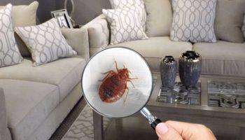 img1-bed-bugs-1f.jpg