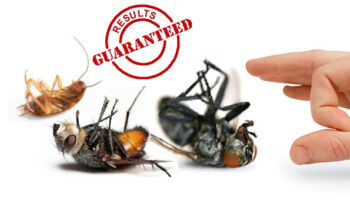Get-to-know-the-types-of-pest-control-services.jpg