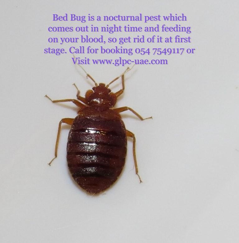Bed bugs control.jpg