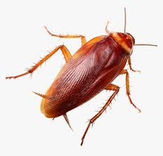 Cockroache s Control.jpg