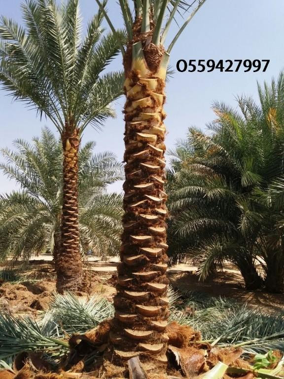 Professional-work-of-landscaping-Services-Contact-us_8(1).jpg